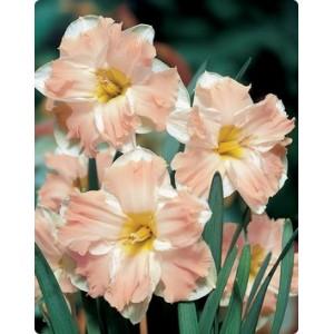 Нарцисс Palmares, , 19.50 грн., 03796, , Нарцис разнекорончатый